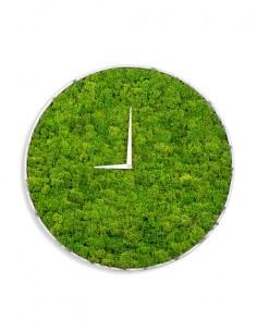 Reloj de musgo preservado