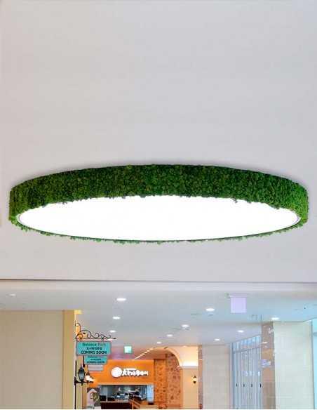 Lámpara de musgo en espacio retail