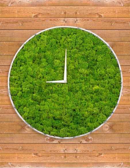 Reloj de musgo sobre fondo madera