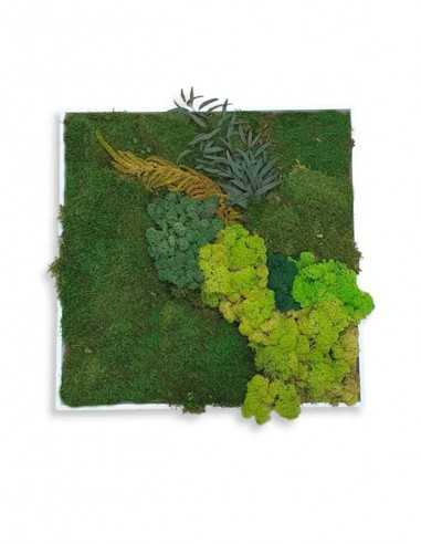 Cuadro de musgo y plantas preservadas