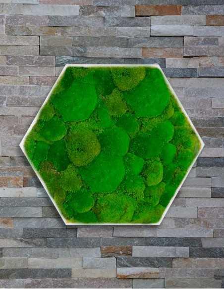 Hexágono con musgo bola sobre pared
