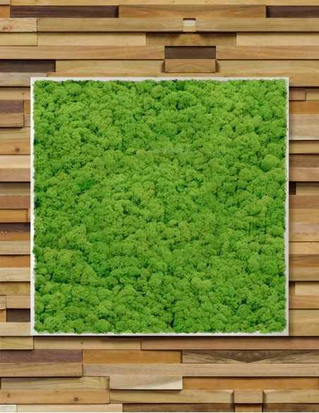 Cuadro de musgo sobre pared