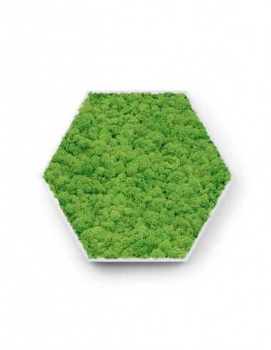 Hexágono de musgo preservado