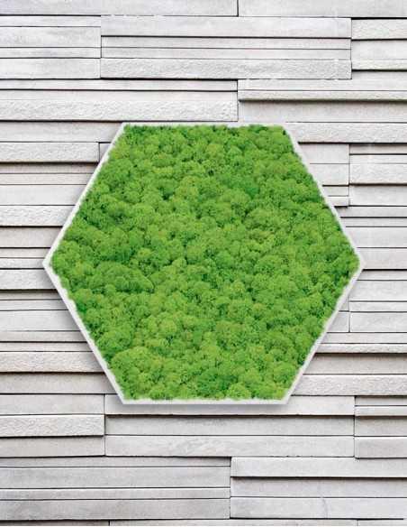 Hexágono de musgo preservado en pared moderna
